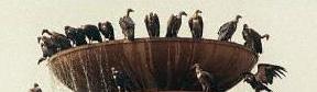 abutres-1.jpg