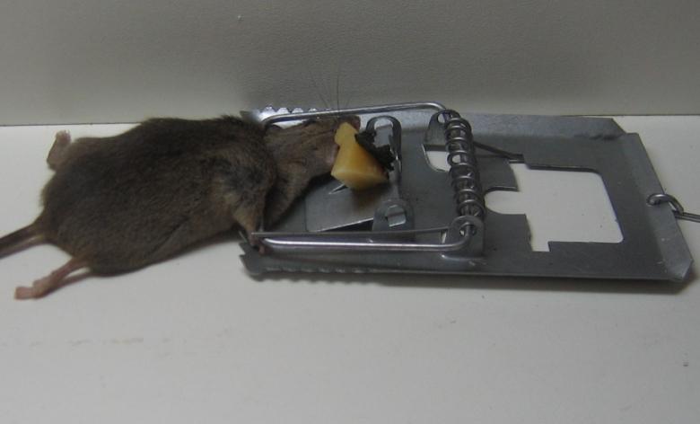 ratoeira.jpg
